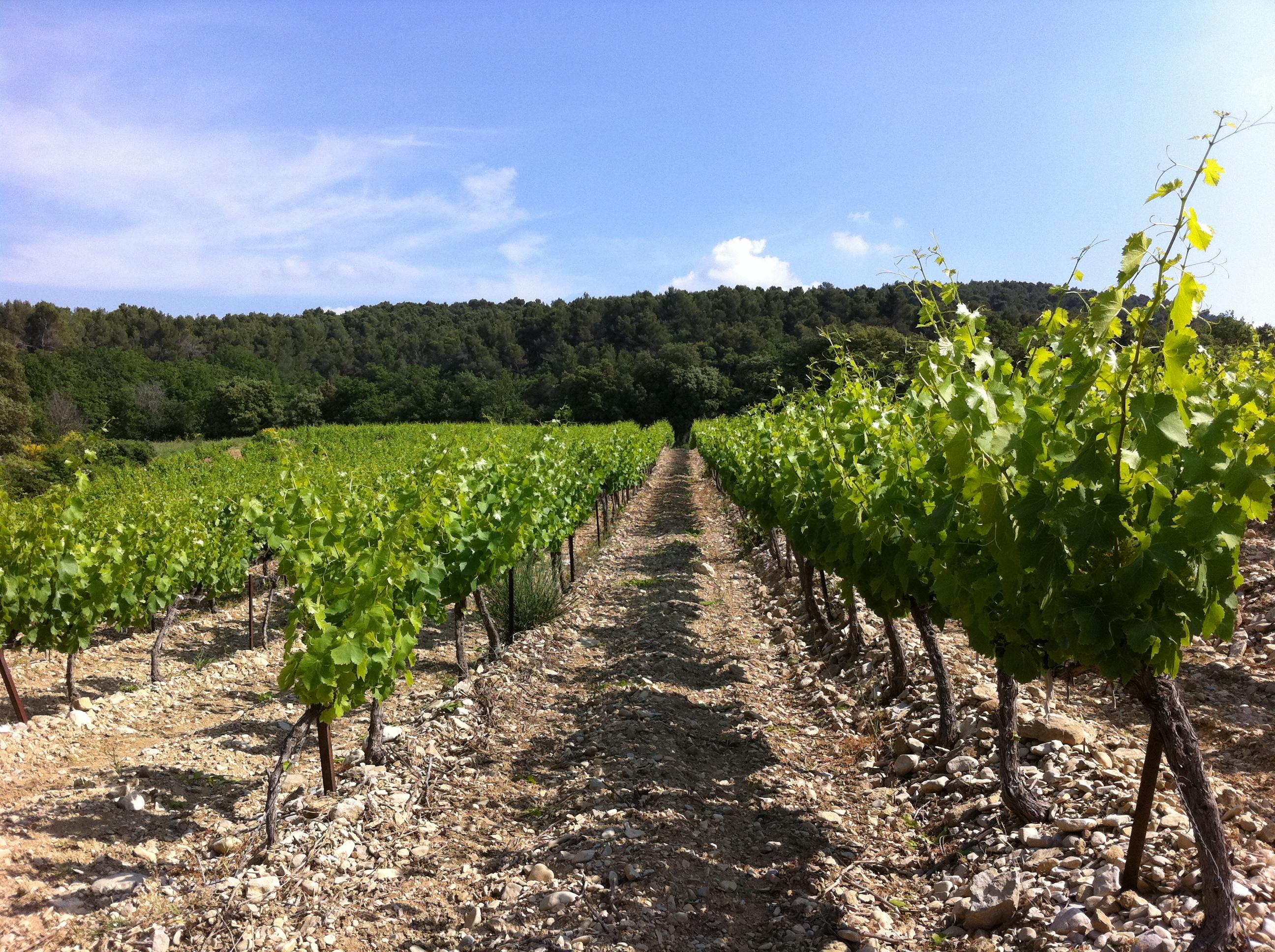 Le Vignoble de Pierry le Domaine